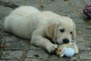 Mein eigenes Spielzeug!