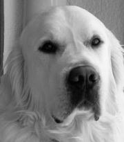 Timeless Golden Gentle Maxwell 2008-2012