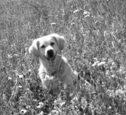 Timeless Golden Be My Little Indy 2003-2013