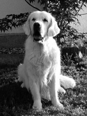 Timeless Golden Anny Mae 2001-2015