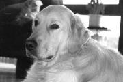 Sammy 1995-2007