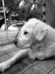 Timeless Golden Canny Calvin 2004-2015